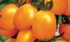 детерминантный гибрид с оранжевыми плодами Дивный F1