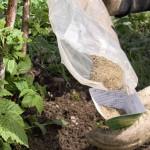 Подкормка малины удобрениями