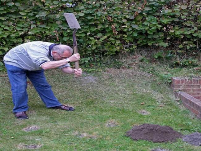 Охота с лопатой на кротов