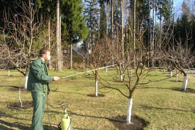 Обработка вишни от болезней и вредителей