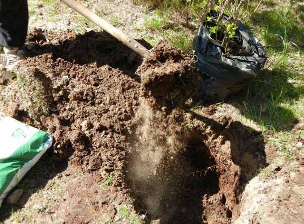 Подготовка почвы перед посадкой саженца
