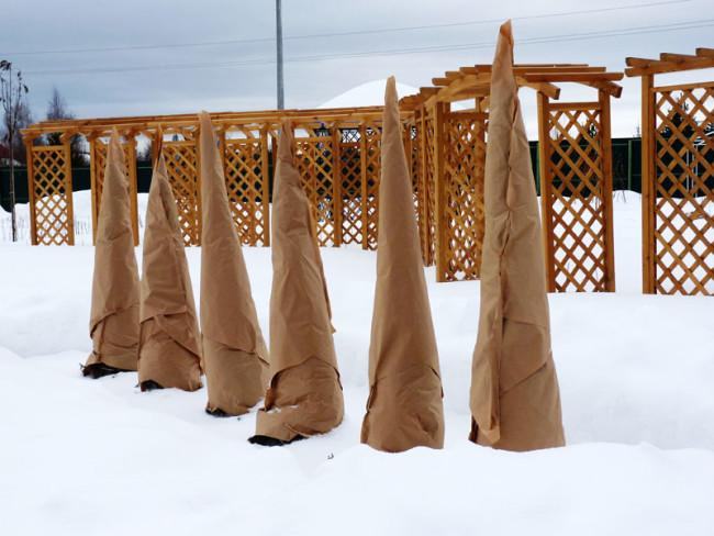 Утепление саженцев на зиму