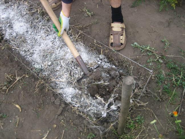 Перекапывание почвы после внесения удобрения