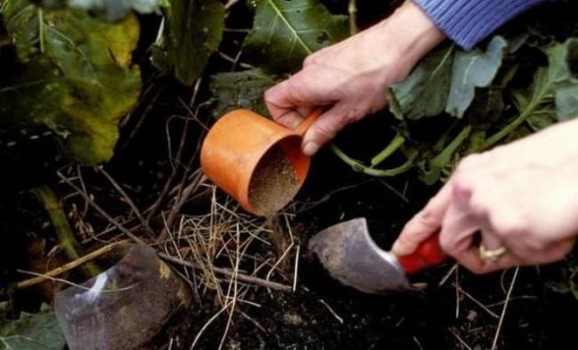 Внесение удобрения под растение