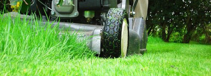 Зеленый газон: ухаживаем по всем правилам