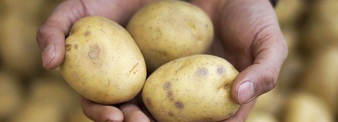 Как посадить скороспелый картофель