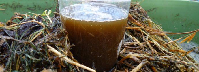 Компостный чай — описание чая из червей