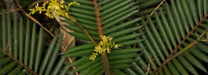 Основные моменты выращивания пальм