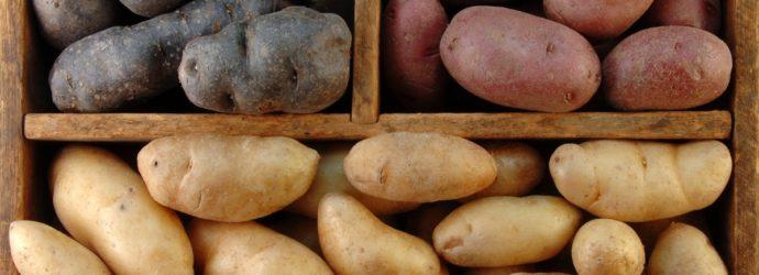 Хранение картофеля: 4 важных правила, которые нужно соблюдать, чтобы сохранить урожай