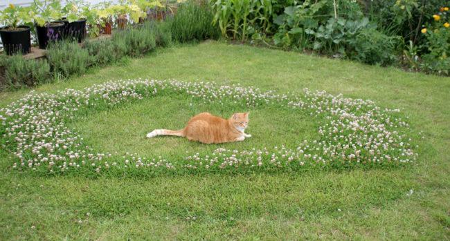 Котик на лужайке
