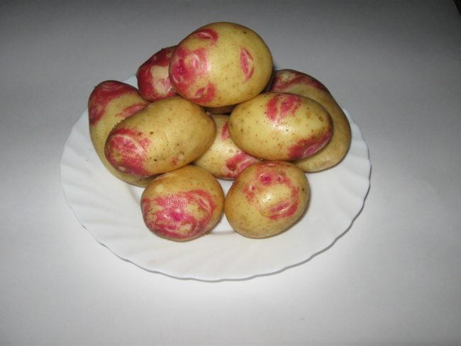 Картофель сорта Пикассо