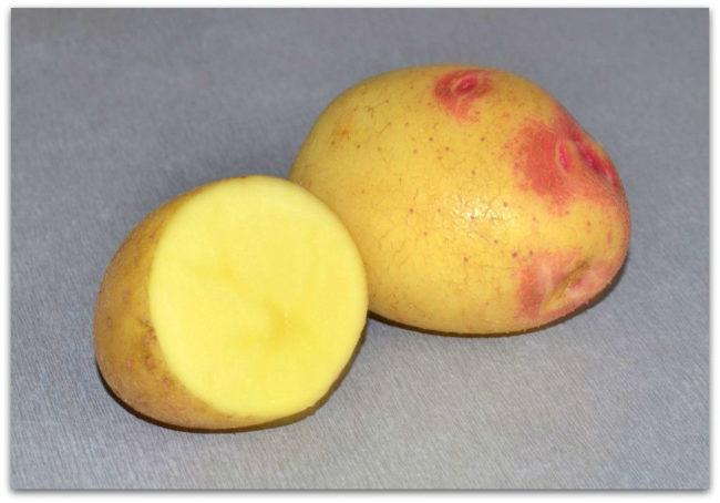 Картофель сорта Лимонка