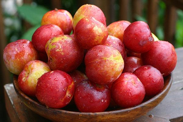 Плоды сорта китайской сливы Неженка