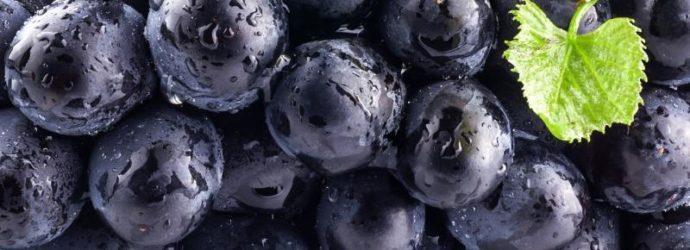 Смородина Селеченская 2 отличается ранней спелостью, крупноплодностью и неприхотливостью