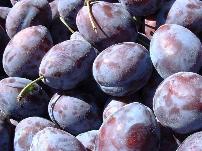 Плоды сливы Богатырской
