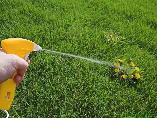 Эффективные биологические средства против сорняков