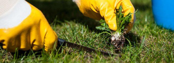 Как избавиться от травы на огороде: обзор самых действенных способов устранения нежелательной растительности