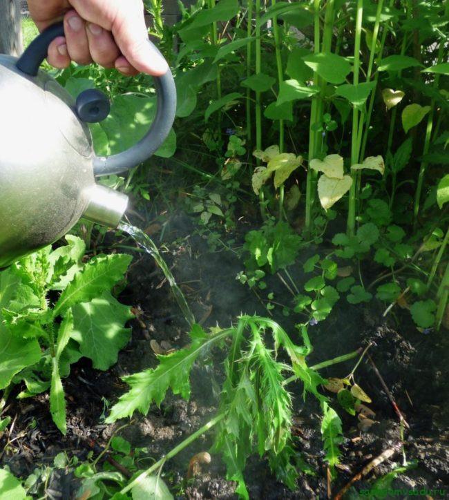 Народные способы борьбы с сорняками