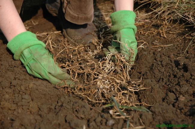 Откуда вообще берутся сорняки и почему от них трудно избавиться?