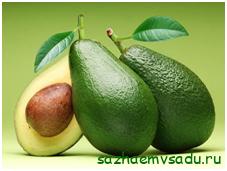 Что такое авокадо – овощ или фрукт?